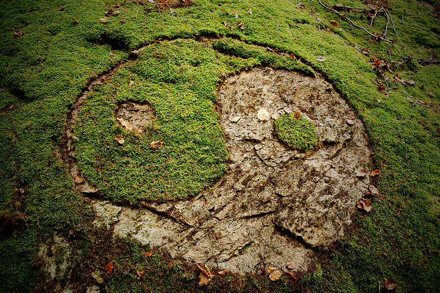 Yin-yang symbol in nature