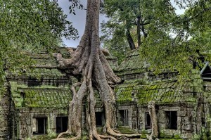An old tree grows from an ancient temple.