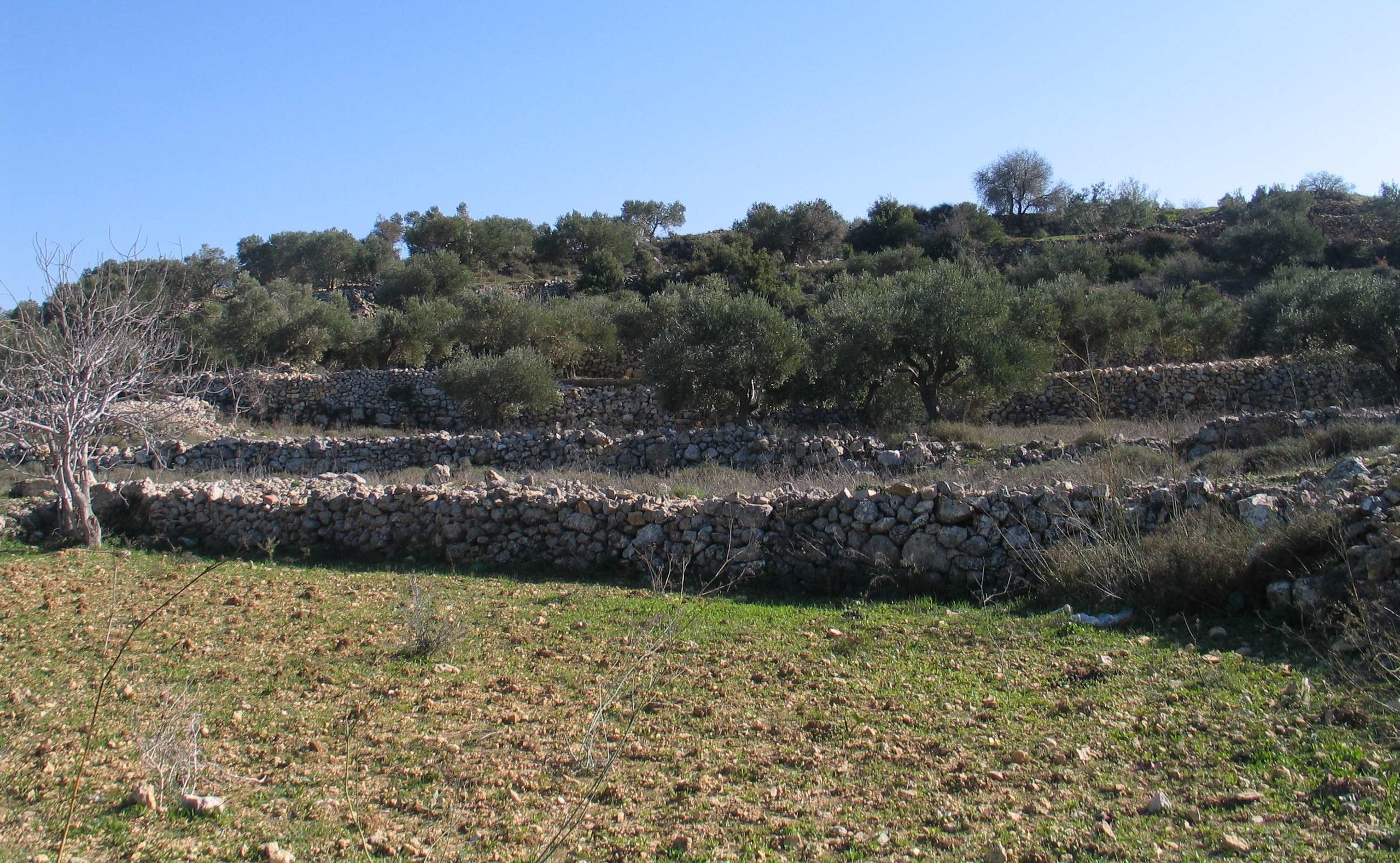 Ancient stone terracing in the Palestinian village of Battir