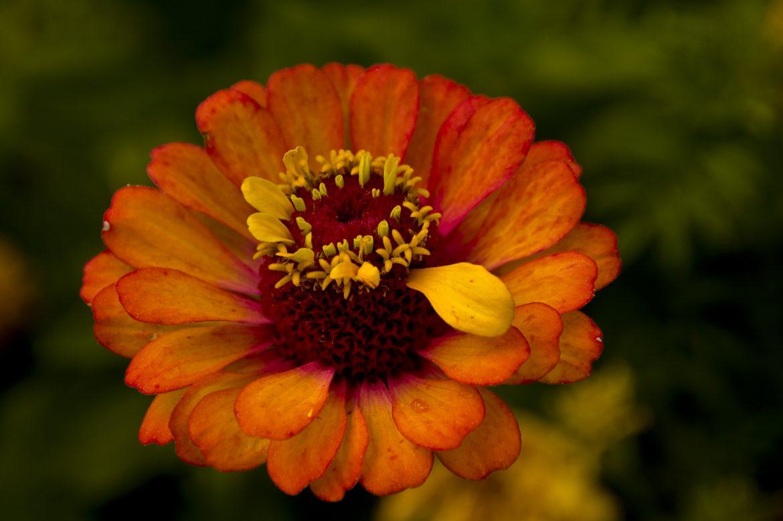 Vermont Summer Flower
